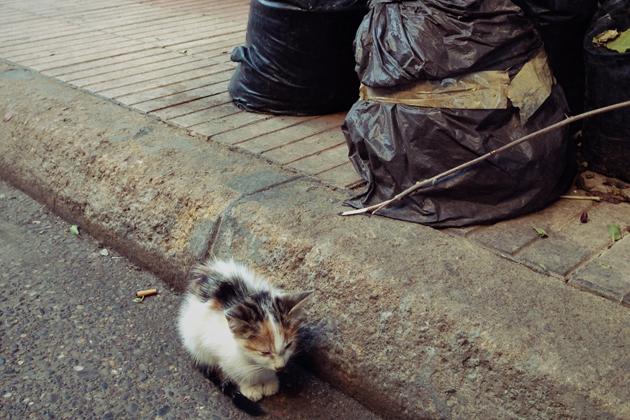 モロッコ猫多すぎ-(2)