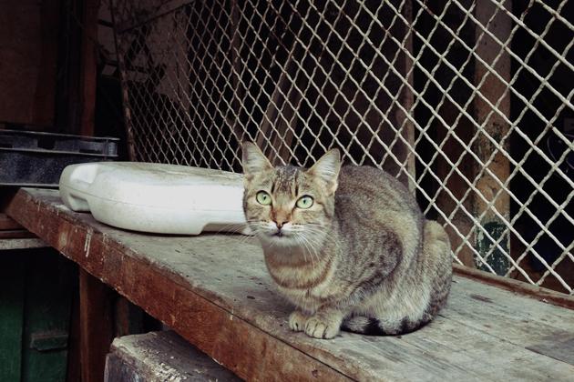 モロッコ猫多すぎ-(1)