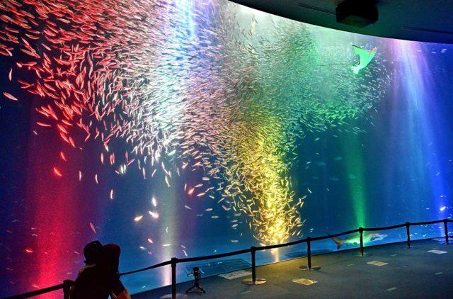 約35,000尾のマイワシが群泳する、名古屋港水族館の名物企画「マイワシのトルネード」がサマーバージョンにアップデート。